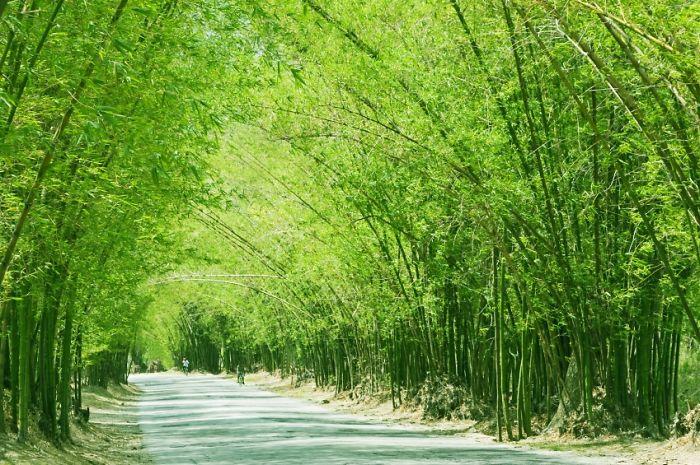 Bamboo Avenue, Jamaica