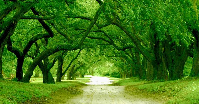 Orton Plantation Driveway Brunswick County, North Carolina, Usa